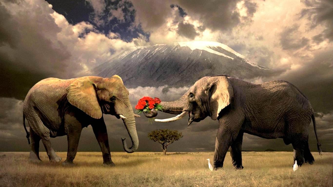 Beautiful Pictures Of Elephant In Hd: Fil Resimleri En Güzel Fil Görselleri Masaüstü
